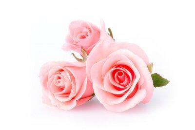 Fotomural rosa flor rosa sobre fundo branco