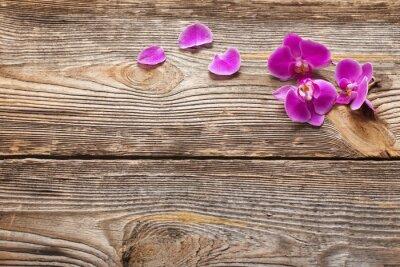 Fotomural Rosa, orquídea, flores, madeira, fundo