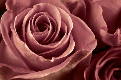 Fotomural Rose flores close-up