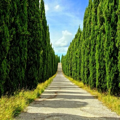 Fotomural Rua longa cipreste forrado em Toscana, Itália