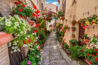 Fotomural Rua na pequena cidade na Itália em dia ensolarado, Umbria