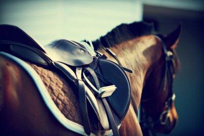 Fotomural Saddle com estribos