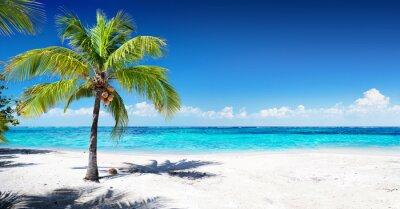 Fotomural Scenic Coral Beach Com Palmeira