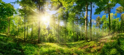 Fotomural Scenic forest of deciduous trees, with blue sky and the bright sun illuminating the vibrant green foliage, panoramic view