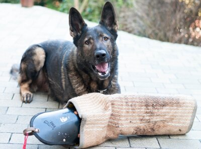 Fotomural Schutzhund