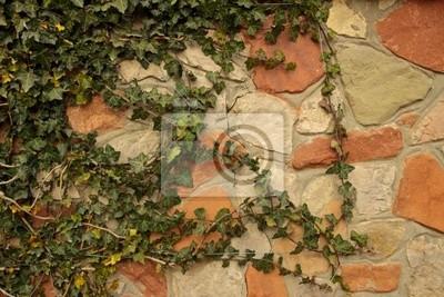 Fotomural Ściana