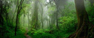 Fotomural Selvas tropicais profundas do sudeste da Ásia em agosto