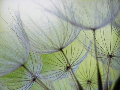 Fotomural semente dandelion
