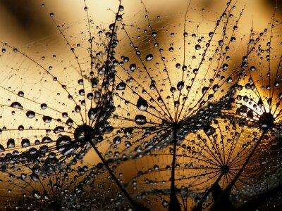 Fotomural semente dandelion molhado