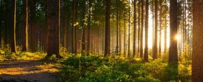 Fotomural Silêncio, floresta, nascente, bonito, luminoso, sol, raios