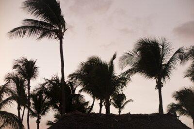 Fotomural Silhouette palmeiras no lindo pôr do sol