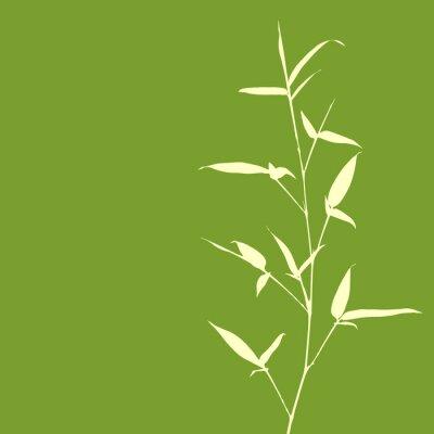 Fotomural Silhueta de bambu no fundo verde