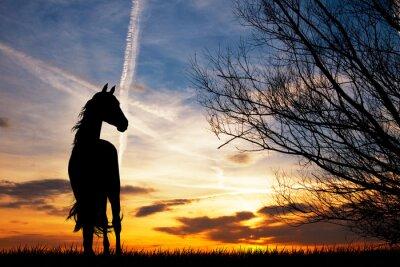 Fotomural Silhueta do cavalo no por do sol