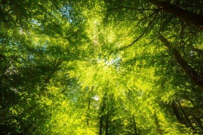Fotomural Sonnenlicht auf Blätterdach