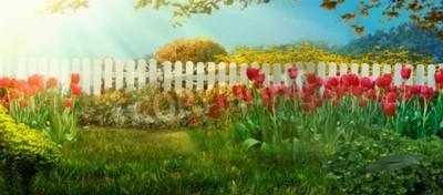 Fotomural Spring garden. Red tulips in garden Spring grass with flowers