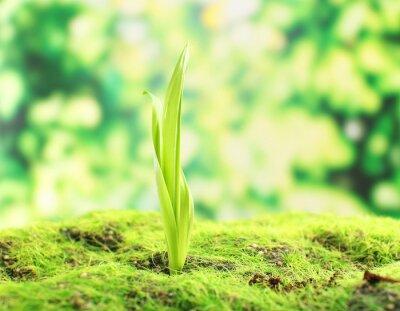 Fotomural Sprout novo na primavera, close up
