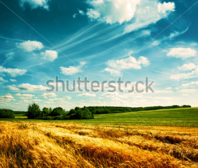 Fotomural Summer Landscape with Wheat Field and Clouds