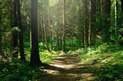 Fotomural Summer sunny forest