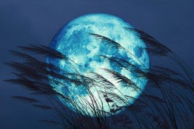 Fotomural super full harvest moon on night sky back grass flower in the field