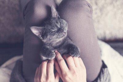 Fotomural Süßes Kätzchen macht ein Nickerchen