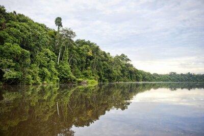 Fotomural Tambopata