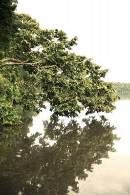 Fotomural Tambopata, província, Ao ar livre