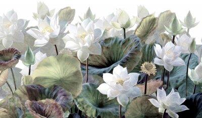 Fotomural The scenic Lotus flowers.