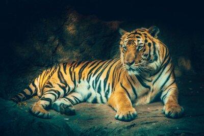 Fotomural Tigre com fundo de pedra da montanha no efeito perigoso perigoso assustador escuro da cor do sentimento escuro.