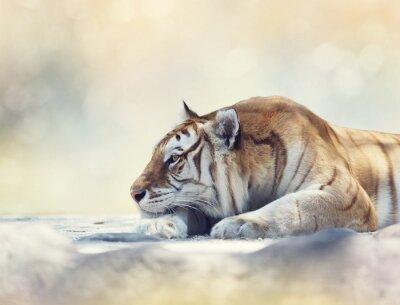 Fotomural Tigre, descansar, rocha