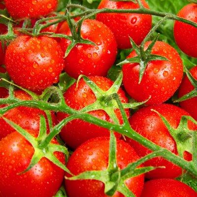Fotomural tomates vermelhos