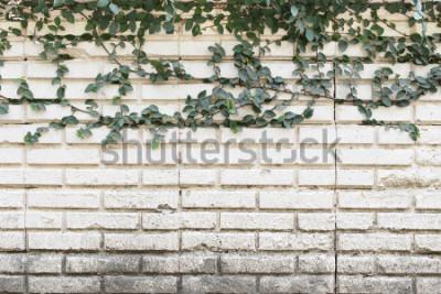 Fotomural Trepadeira verde planta crescendo na parede de tijigos