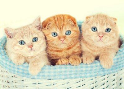 Fotomural Três gatinhos pequenos na cesta