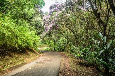 Fotomural Trilha entre árvores em um parque em São Paulo