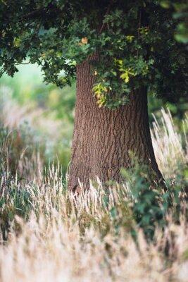 Fotomural Tronco de árvore entre a grama amarela alta.