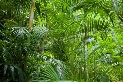 Fotomural Tropical exuberante verde palmeira jungle background