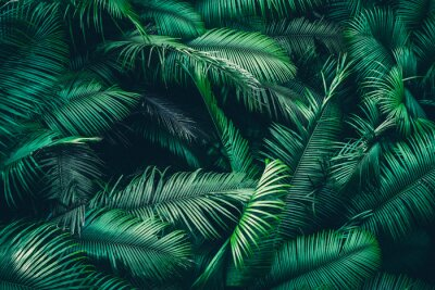 Fotomural tropical forest natural background, nature scene in green tone style