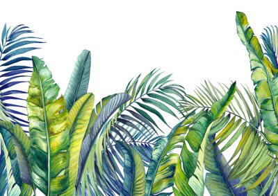 Fotomural Tropical palm and banana leaves. Jungle wallpaper. Isolated watercolor background.
