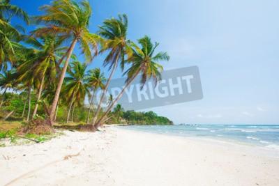 Fotomural Tropical, praia, coco, palma, mar