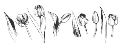 Fotomural tulipa flor gráfico ilustração decorativos natureza arte