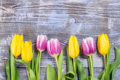 Fotomural Tulipa, flores, madeira, fundo