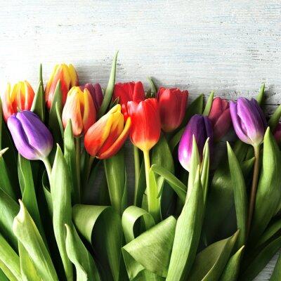 Fotomural Tulipanês