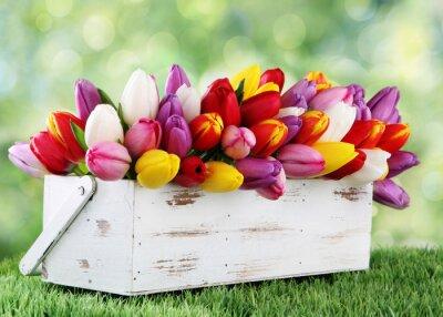 Fotomural tulipas
