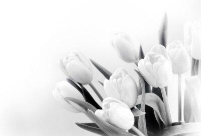 Fotomural Tulipas brancas no fundo branco bw