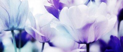 Fotomural tulipas cian violeta ultra leve