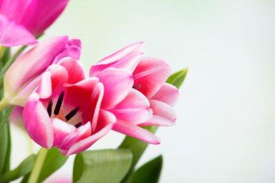 Fotomural Tulpenblüten