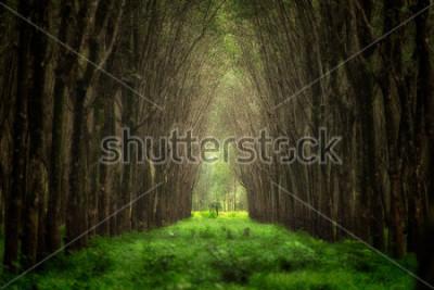 Fotomural Túnel da árvore imaginário. Fantasia de floresta de natureza linda.