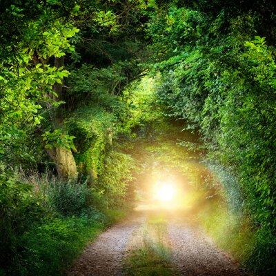 Fotomural Túnel das árvores que levam até a luz