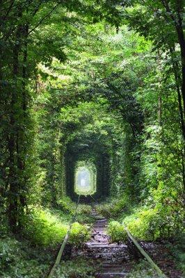 Fotomural Túnel do amor