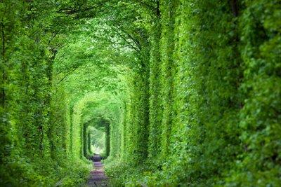 Fotomural Túnel real fantástico do amor, árvores verdes e a estrada de ferro