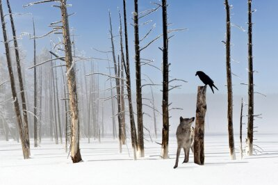 Fotomural Two seconds to live - Wolf and Raven